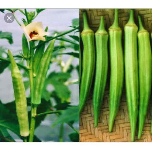 Hạt giống Đậu Bắp Cao sảno - Gói lớn 50 gram