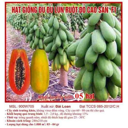 5h Hạt Giống Đu Đủ Lùn Ruột Đỏ Trái Lớn 2kg Carica papaya