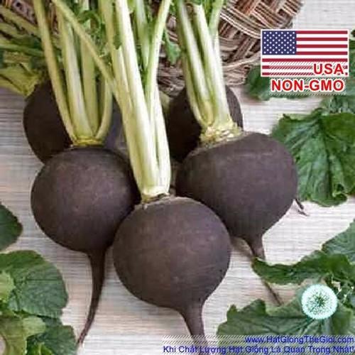 20h Hạt Giống Củ Cải Đen Black Spanish Cay Cay Raphanus sativus - 6326009 , 12921105 , 15_12921105 , 12000 , 20h-Hat-Giong-Cu-Cai-Den-Black-Spanish-Cay-Cay-Raphanus-sativus-15_12921105 , sendo.vn , 20h Hạt Giống Củ Cải Đen Black Spanish Cay Cay Raphanus sativus