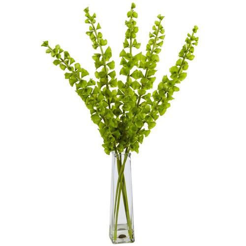 Hạt giống hoa lỗ băng - vỏ sò và Tài liệu HD cách gieo trồng