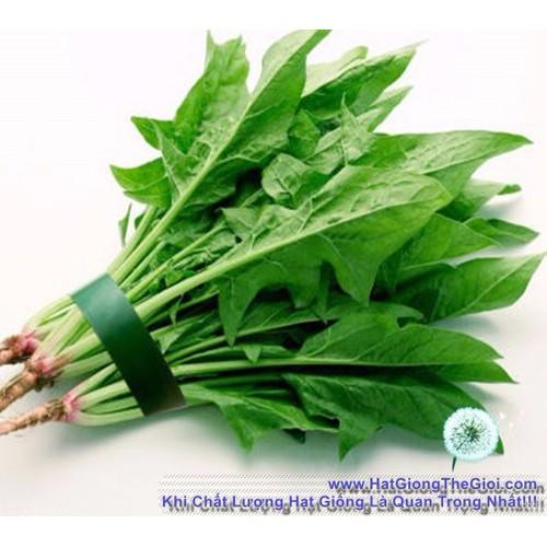 20gr Hạt Giống Bó Xôi Chịu Nhiệt Spinacia oleracea