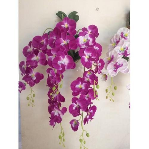 Cụm hoa lan treo tường