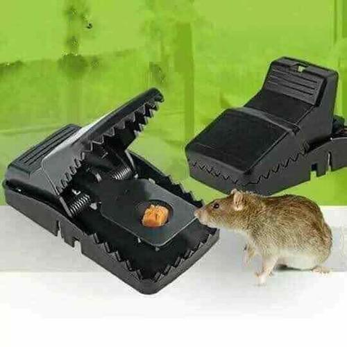 dập mõm chuột