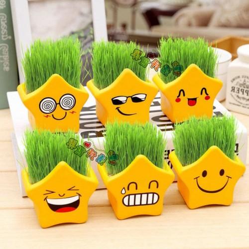 Combo 5 chậu trồng cây hình sao- Chậu nhựa trồng cây