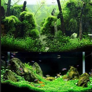 Đất Nền Trồng Cây Thủy Sinh, Phân nền DIA MAX AQUA 2KG giàu dinh dưỡng. Hàng mới nhất 2019 [ĐƯỢC KIỂM HÀNG] 12775604 - 12775604 thumbnail