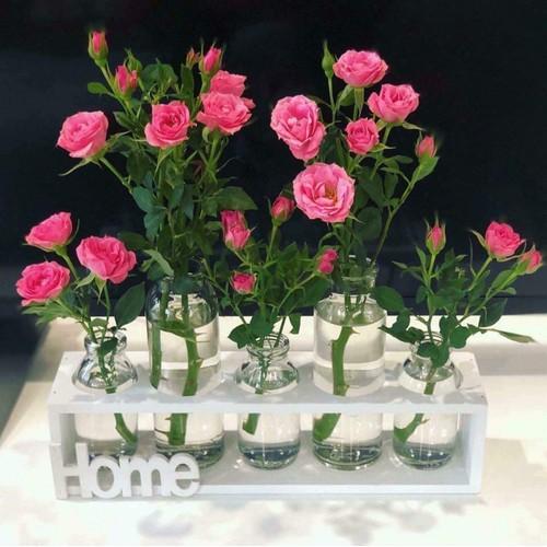 set kệ bình thủy tinh 5 lọ cắm hoa