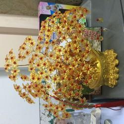 nguyên liệu cây kim tiền 16 canh 10 hoa