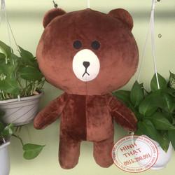 Gấu Brown 50cm - Quà tặng cực xinh