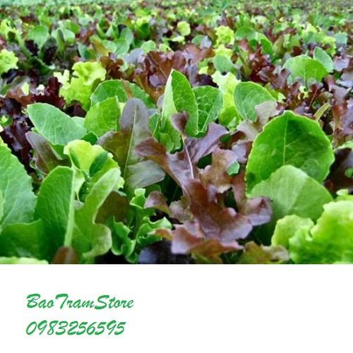 Hạt giống xà lách baby nhiều màu gói 5 gram xuất xứ Hà Lan