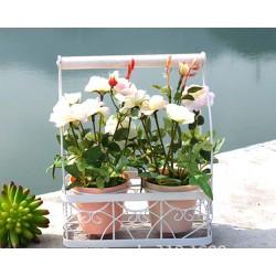 Cặp hoa hồng trắng giá sắt