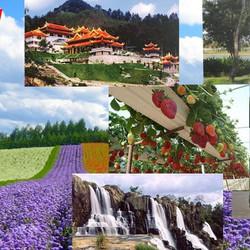 Land Tour Lễ Hội Mai Anh Đào 01 ngày - Khởi Hàng hằng ngày