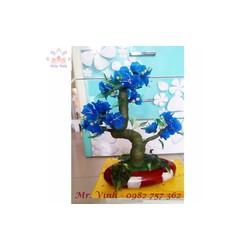 Hoa pha lê - Cứng Cáp - Bonsai
