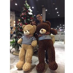 Gấu bông Teddy khổ 1m6 giá rẻ