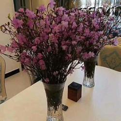hoa đổ quyên khô tphcm