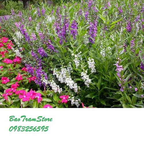 Hạt giống hoa ngọc hân Mix nhiều màu gói 5 hạt xuất xứ Đức - 5138488 , 8450082 , 15_8450082 , 16000 , Hat-giong-hoa-ngoc-han-Mix-nhieu-mau-goi-5-hat-xuat-xu-Duc-15_8450082 , sendo.vn , Hạt giống hoa ngọc hân Mix nhiều màu gói 5 hạt xuất xứ Đức