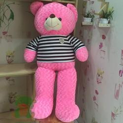 Gấu bông Teddy khổ 1m6 màu hồng