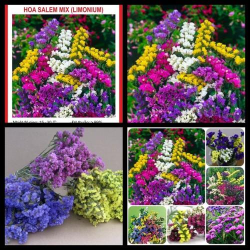 Hạt giống hoa Salem mix Limonium  LUCKY SEEDS - 50 hạt - 5342479 , 8899564 , 15_8899564 , 28000 , Hat-giong-hoa-Salem-mix-Limonium-LUCKY-SEEDS-50-hat-15_8899564 , sendo.vn , Hạt giống hoa Salem mix Limonium  LUCKY SEEDS - 50 hạt