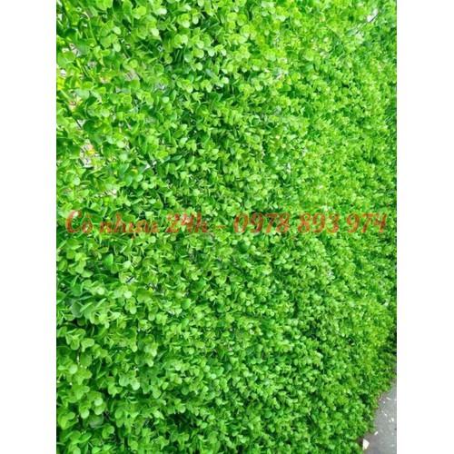 cỏ nhựa trang trí tường, cỏ nhựa trang trí tại hà nội - 12912551 , 9001903 , 15_9001903 , 60000 , co-nhua-trang-tri-tuong-co-nhua-trang-tri-tai-ha-noi-15_9001903 , sendo.vn , cỏ nhựa trang trí tường, cỏ nhựa trang trí tại hà nội