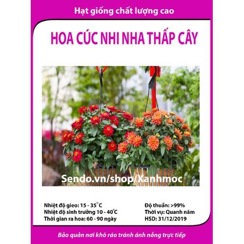 Hạt giống hoa cúc nhi nha thấp cây - Zinnia - 5312922 , 8835704 , 15_8835704 , 12000 , Hat-giong-hoa-cuc-nhi-nha-thap-cay-Zinnia-15_8835704 , sendo.vn , Hạt giống hoa cúc nhi nha thấp cây - Zinnia