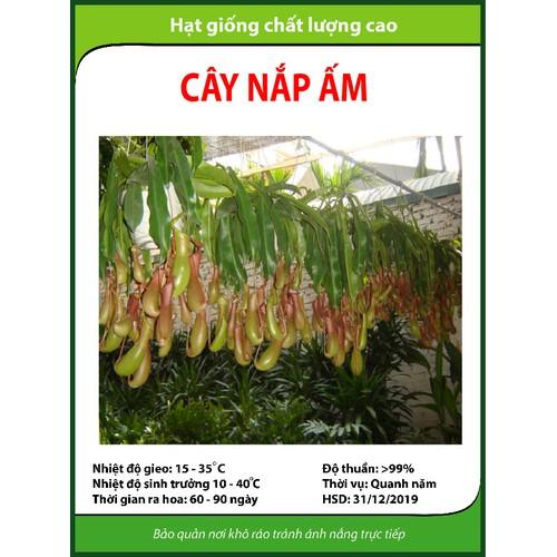 Hạt giống cây Nắp ấm - 5318813 , 8850073 , 15_8850073 , 17000 , Hat-giong-cay-Nap-am-15_8850073 , sendo.vn , Hạt giống cây Nắp ấm