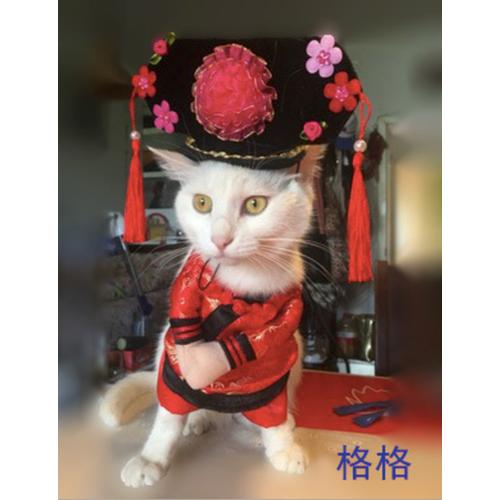 Áo chó mèo cosplay cách cách A45 size M