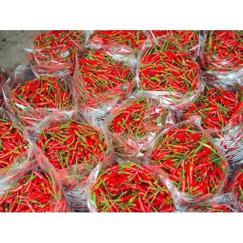 Hạt giống ớt chỉ thiên siêu cay Phú Nông - 5539425 , 9315500 , 15_9315500 , 16000 , Hat-giong-ot-chi-thien-sieu-cay-Phu-Nong-15_9315500 , sendo.vn , Hạt giống ớt chỉ thiên siêu cay Phú Nông