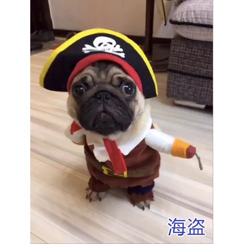 Áo chó mèo cosplay cướp biển A44 size M