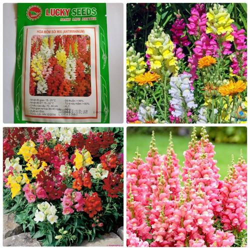 Hạt giống hoa mõm sói mix LUCKY SEEDS -100 hạt - 5875042 , 9924573 , 15_9924573 , 25000 , Hat-giong-hoa-mom-soi-mix-LUCKY-SEEDS-100-hat-15_9924573 , sendo.vn , Hạt giống hoa mõm sói mix LUCKY SEEDS -100 hạt