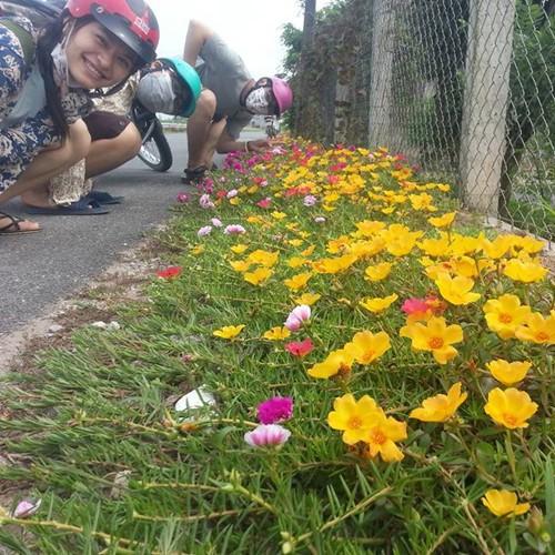 COMBO 2 gói hạt giống hoa mười giờ mỹ TẶNG 1 phân bón - 5881649 , 9934371 , 15_9934371 , 49000 , COMBO-2-goi-hat-giong-hoa-muoi-gio-my-TANG-1-phan-bon-15_9934371 , sendo.vn , COMBO 2 gói hạt giống hoa mười giờ mỹ TẶNG 1 phân bón