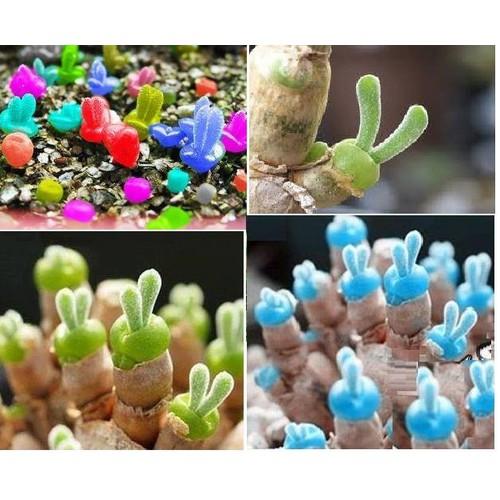 Hạt giống cây tai thỏ mix màu  gói 50 hạt - 5895299 , 9955711 , 15_9955711 , 45000 , Hat-giong-cay-tai-tho-mix-mau-goi-50-hat-15_9955711 , sendo.vn , Hạt giống cây tai thỏ mix màu  gói 50 hạt
