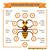 COMBO 500Ml Mật ong thiên nhiên+500g Tinh bột nghệ