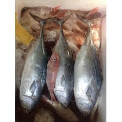Cá ngừ làm sạch