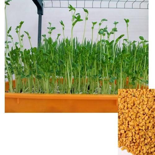 COMBO 2 gói hạt giống rau mầm thảo dược Methi TẶNG 1 phân bón - 5924641 , 9998275 , 15_9998275 , 49000 , COMBO-2-goi-hat-giong-rau-mam-thao-duoc-Methi-TANG-1-phan-bon-15_9998275 , sendo.vn , COMBO 2 gói hạt giống rau mầm thảo dược Methi TẶNG 1 phân bón