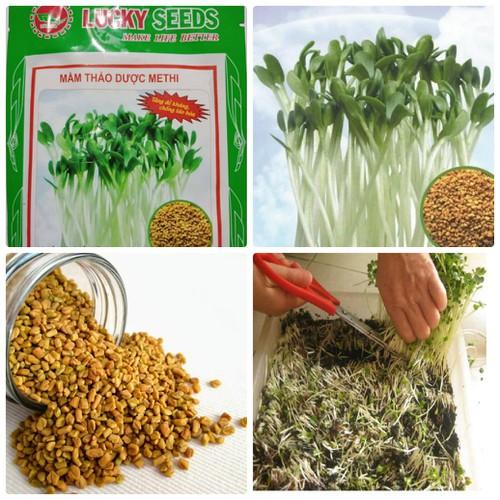 Hạt giống rau mầm thảo dược Methi-20gr