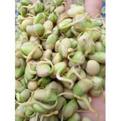 Mầm đậu nành nguyên chất