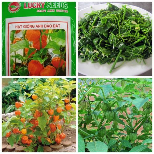 Hạt giống Anh Đào Đất -Cây Tầm Bóp LUCKY SEEDS
