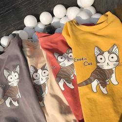 áo thun from rộng mèo