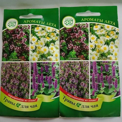 Hạt giống bộ hoa làm trà mix russis