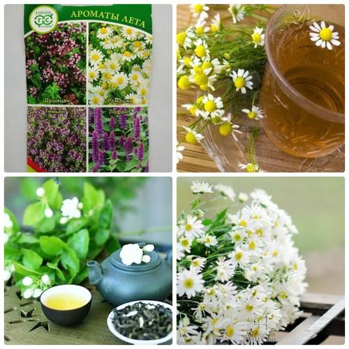 Combo 2 gói hạt giống bộ hoa làm trà tặng 1 phân bón