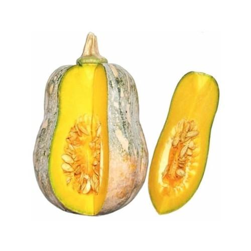 Combo 2 gói hạt giống bí mật tặng 1 phân bón