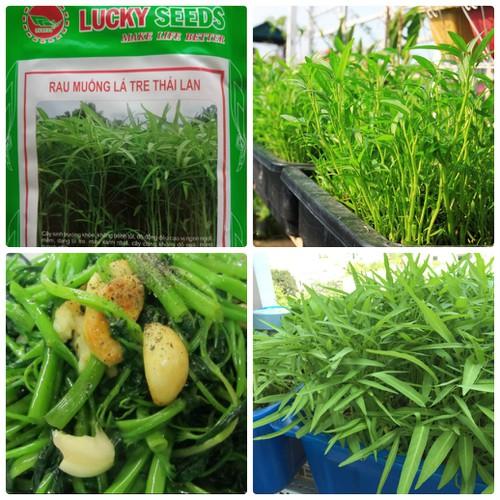 Hạt giống rau muống lá tre Thái Lan -50 gr