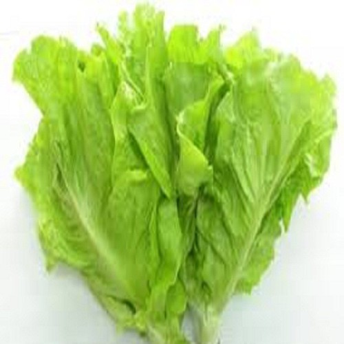 Hạt giống rau xà lách|Hạt giống rau xà lách mỡ - 4191646 , 10349794 , 15_10349794 , 10000 , Hat-giong-rau-xa-lachHat-giong-rau-xa-lach-mo-15_10349794 , sendo.vn , Hạt giống rau xà lách|Hạt giống rau xà lách mỡ