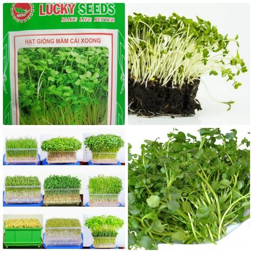 Hạt giống rau mầm cải xoong ngọt dinh dưỡng - 5953041 , 10038795 , 15_10038795 , 25000 , Hat-giong-rau-mam-cai-xoong-ngot-dinh-duong-15_10038795 , sendo.vn , Hạt giống rau mầm cải xoong ngọt dinh dưỡng