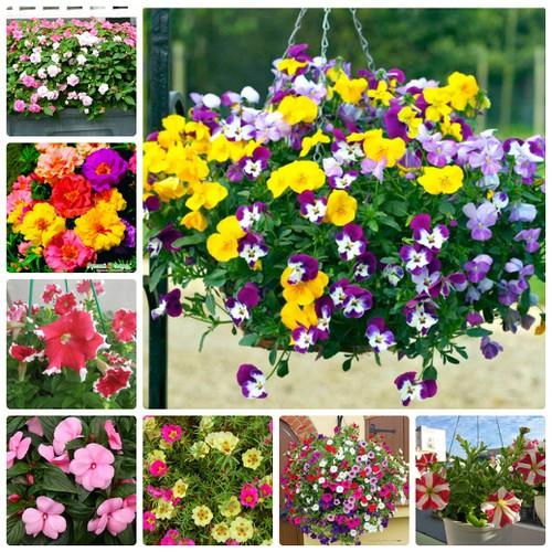 COMBO 10 loại hạt giống hoa giỏ treo đẹp dễ trồng 4 mùa
