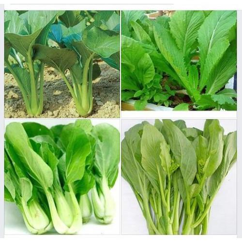 Combo 4 gói hạt giống rau cải - cải ngọt , cải xanh , cải chíp , cải ngòng