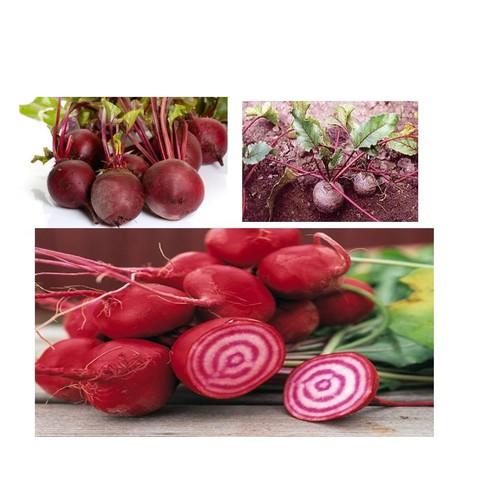 Hạt giống củ dền đỏ - 1 gói 2gram