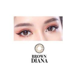 Contact lens DIANA BROWN 0-5 độ .kèm khay gương
