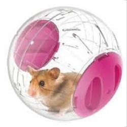 Bóng Chạy Cho Chuột - Đồ Chơi Hamster - Bóng Chạy Hamster Size To