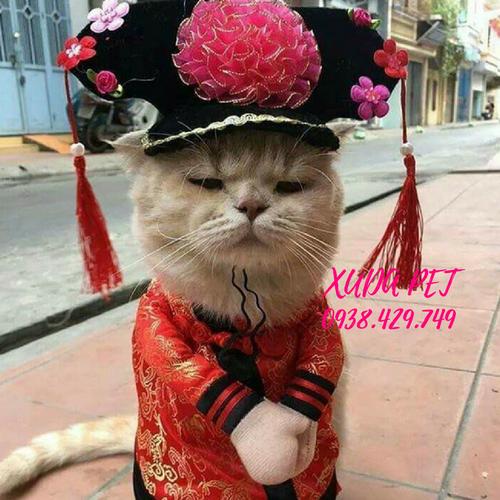 Quần áo chó mèo - quần áo chó mèo cosplay Hoàn Châu Cách Cách - 4463468 , 10689282 , 15_10689282 , 219000 , Quan-ao-cho-meo-quan-ao-cho-meo-cosplay-Hoan-Chau-Cach-Cach-15_10689282 , sendo.vn , Quần áo chó mèo - quần áo chó mèo cosplay Hoàn Châu Cách Cách