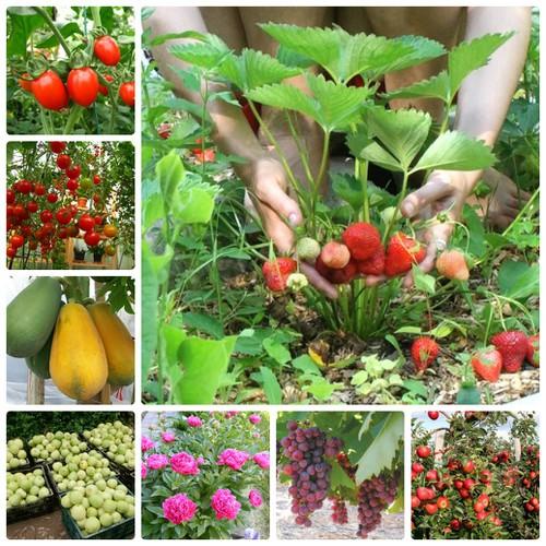 COMBO hạt giống rau hoa LUCKY siêu tiết kiệm HOT VIP 10 FREESHIP